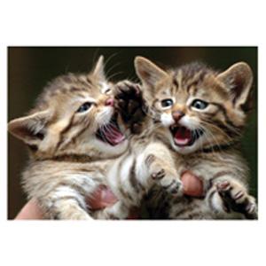 Открытка «Котята»