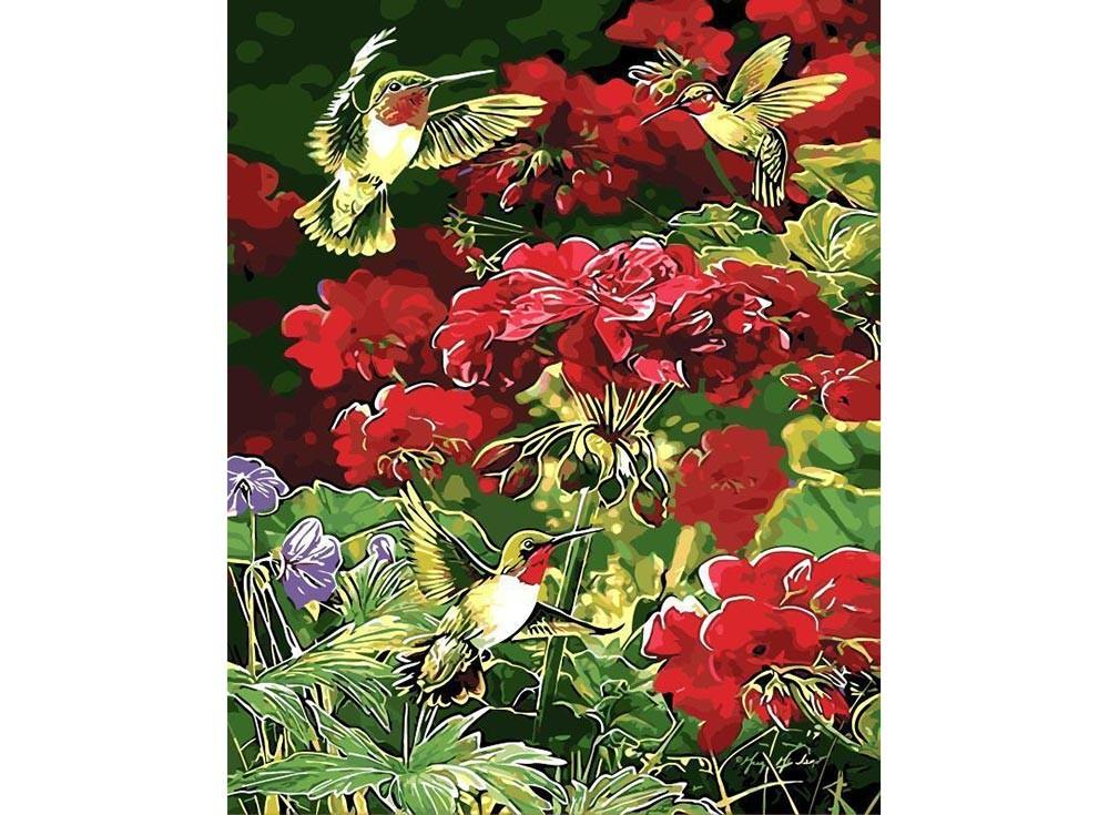 Картины по номерам «Колибри»